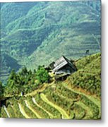 Sapa Rice Fields Metal Print