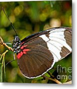 Sapho Butterfly Metal Print