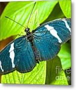 Sara Butterfly Metal Print