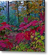 Sassafras Tea Anyone Metal Print