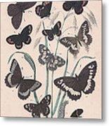 Satyridae Metal Print