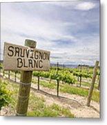 Sauvignon Blanc Grapes Growing In Vineyard Metal Print
