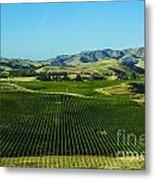 Sauvignon Blanc Vines Metal Print