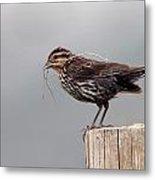 Savanah Sparrow Metal Print