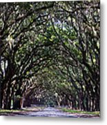 Savannah Wormsloe  Metal Print