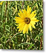 Save The World Little Bee Metal Print