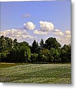 Savie Island Flower Garden Metal Print