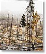 Sawback Burn, On Bow Valley Parkway Metal Print