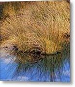Sawgrass Metal Print
