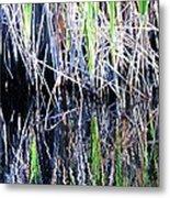 Sawgrass Reflections Metal Print