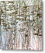 Sawgrass Swamp Panorama Metal Print