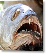 Fanged Fish Say Ahhhhhh Metal Print