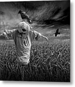 Scarecrow And Black Crows Over A Cornfield Metal Print