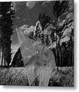 Scarf In The Winds In Black And White Metal Print