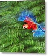Scarlet Macaw Juvenile In Flight Metal Print
