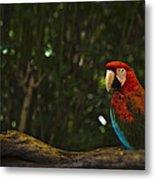 Scarlet Macaw Profile Metal Print