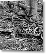 Scary Roots Metal Print