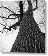 Scary Tree Metal Print by Richie Stewart