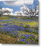 Scattered Bluebonnets Metal Print