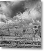 Scattered Trees Metal Print