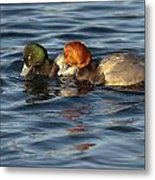 Scaup And Redhead Couple  Metal Print