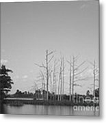 Scenic Swamp Cypress Trees Black And White Metal Print