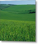 Scenic View Of A Field, South Downs Metal Print