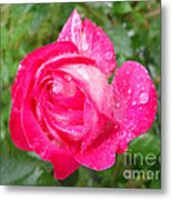 Scented Rose Metal Print by Ramona Matei