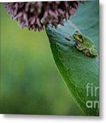 Schlitz Audubon Tree Frog Metal Print