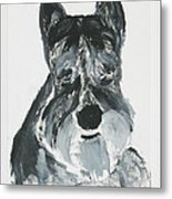 Schnauzing Around Metal Print