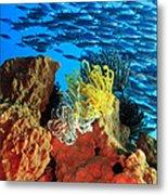 School Of Fishes Metal Print