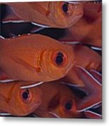 School Of Red Soldierfish Metal Print