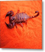 Scorpion Red Sand Sting Insect Metal Print