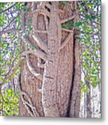 Scorpion Tree Metal Print