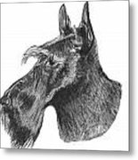 Scottish Terrier Dog Metal Print by Catherine Roberts