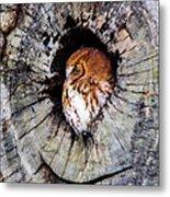 Screech Owl 02 Metal Print