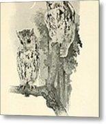 Screech Owls Metal Print