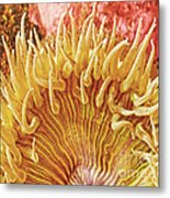 Sea Anenome Stretch Metal Print by Artist and Photographer Laura Wrede