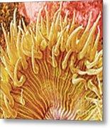 Sea Anenome Stretch Metal Print