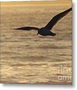 Sea Bird In Flight Metal Print by Paul Topp
