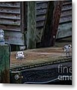 Sea Birds Dockside Metal Print