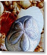 Sea Biscuit Metal Print