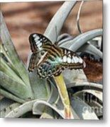 Sea Blue Butterfly Two Metal Print