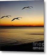 Sea Cruisers Metal Print