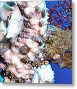 Sea Cucumbers 1 Metal Print