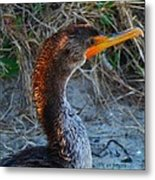 Sea Duck Metal Print
