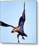 Sea Eagle Flight Metal Print