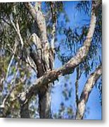 Sea Eagle Vantage Point Metal Print
