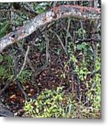 Sea Grape Jungle Metal Print