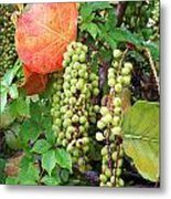 Sea Grapes And Poison Ivy Metal Print